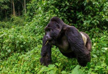 Il regno incontrastato dei Primati, un'esperienza indimenticabile, imm...