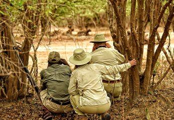 La nuova frontiera per gli appassionati di safari: la natura selvaggia...