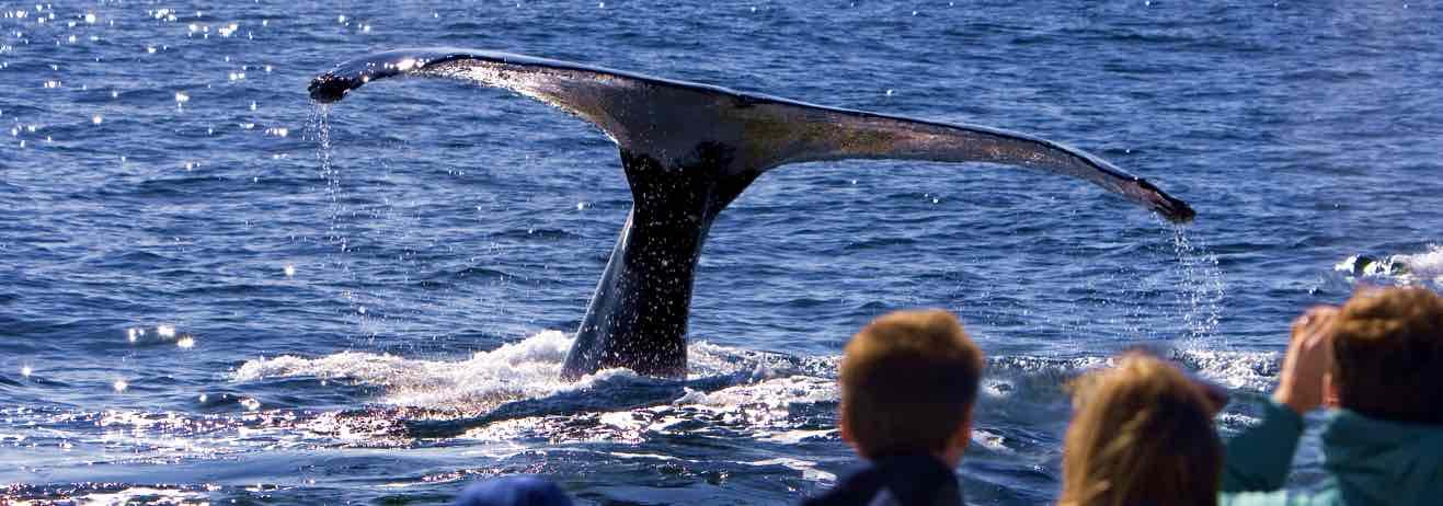 Tra balene e Big Five, esplorando il famoso Kruger, ammirando le mitic...