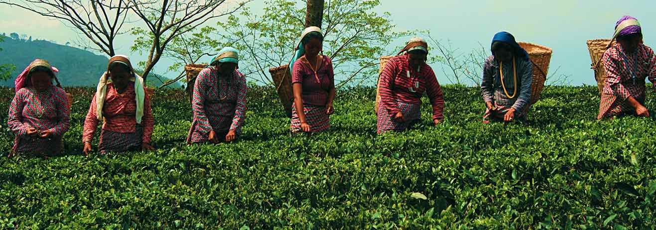 Dalle tradizioni e cultura del West Bengal ai Giardini del Té del Darj...