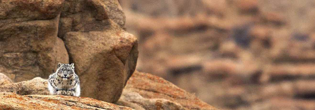 Viaggio in Ladakh alla ricerca del Leopardo delle Nevi