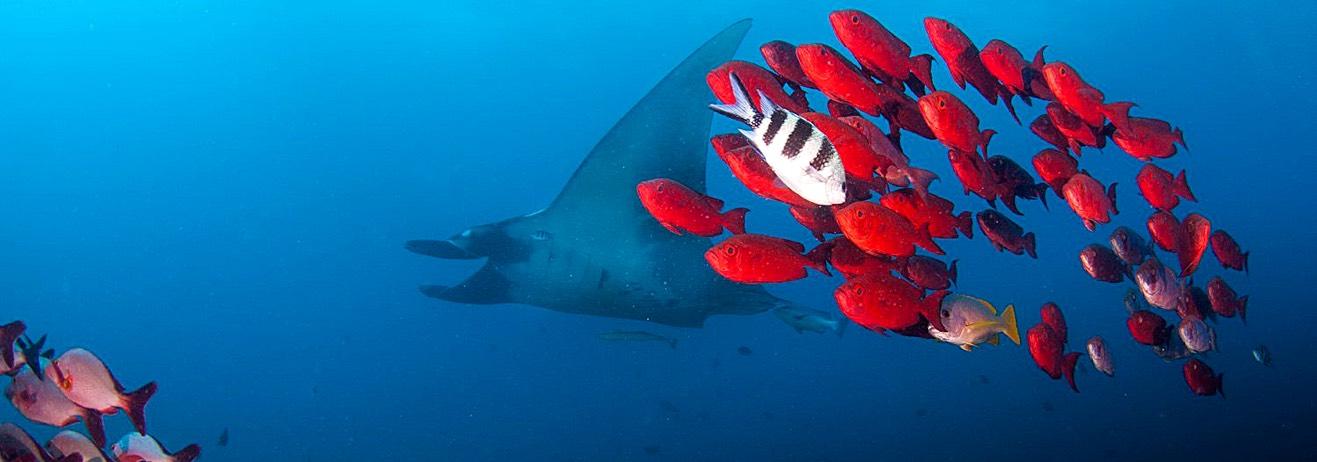 Il paradiso per gli appassionati di immersioni: in catamarano alla sco...