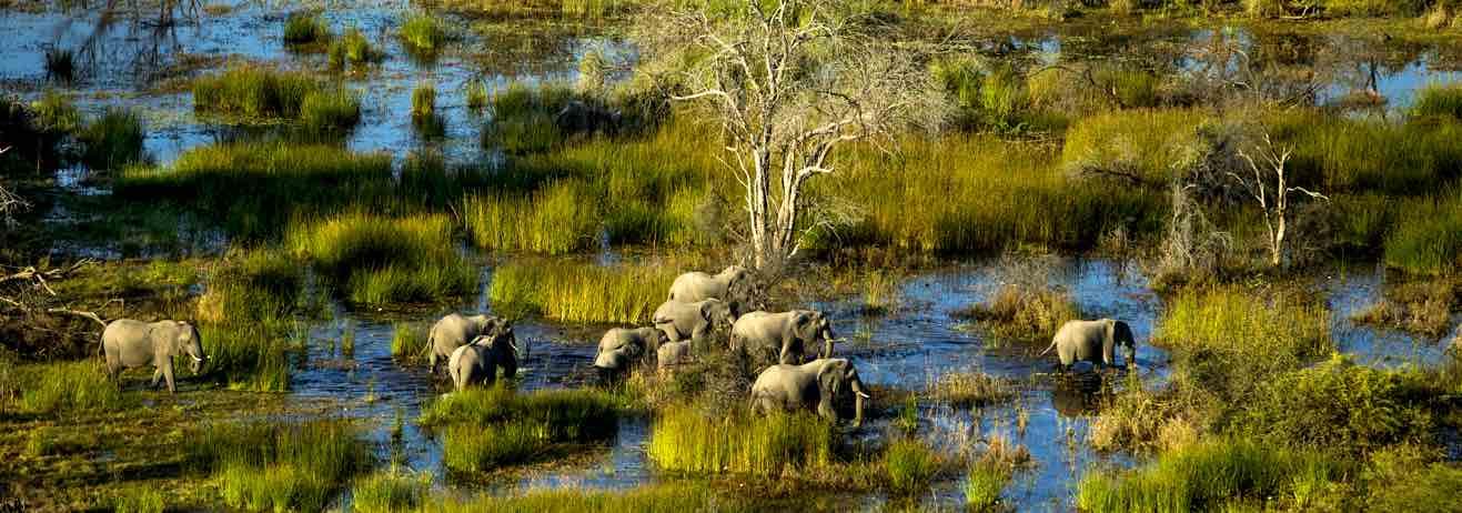 Emozioni allo stato puro dal Delta dell'Okavango al Chobe National Par...