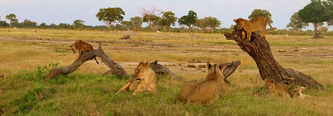 Per vivere i safari più emozionanti, immersi nella grande natura afric...