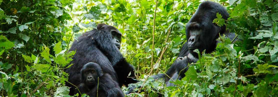 A contatto con gorilla e scimpanzé, per una delle emozioni più incredi...