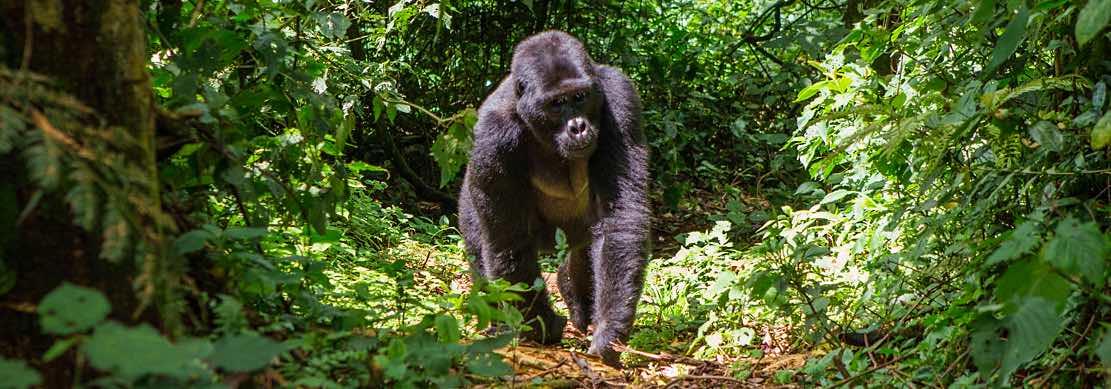 Primati, natura e tradizioni, per immergersi nella wilderness africana